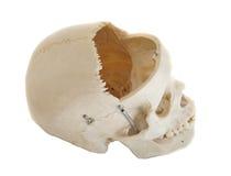 与开放额骨的头骨旁边外形 免版税库存照片