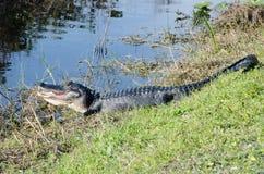 与开放嘴的一条鳄鱼 库存照片