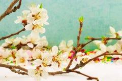 与开花的分支的抽象春天边界背景 库存图片