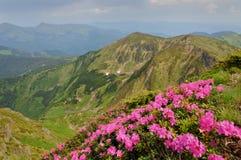 与开花的山坡的夏天风景 免版税图库摄影