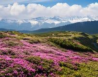 与开花的山坡的夏天风景 免版税库存图片