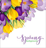 与开花的春天的春天背景开花,番红花 向量 库存例证