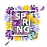 与开花的春天的春天背景开花,番红花 向量 库存图片