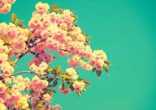 与开花的树的美好的自然场面 免版税库存照片