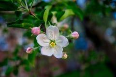 与开花的树的美好的自然场面 库存照片