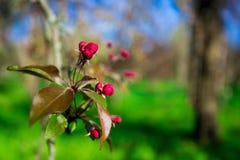 与开花的树的美好的自然场面 库存图片