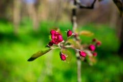与开花的树的美好的自然场面 免版税图库摄影