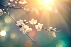 与开花的树的自然场面和太阳飘动 图库摄影
