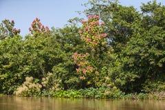与开花的树,蓝天的密林河岸 免版税库存照片
