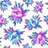 与开花的桃红色和蓝色牡丹的花卉无缝的样式,在白色背景 水彩手拉的绘画例证 P 库存图片