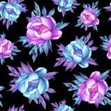 与开花的桃红色和蓝色牡丹的花卉无缝的样式,在黑背景 水彩手拉的绘画例证 免版税库存照片