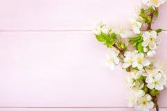 与开花的樱桃分支的浅粉红色的木背景 库存图片