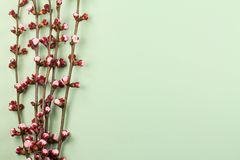 与开花的樱桃枝杈的春天背景 免版税库存照片