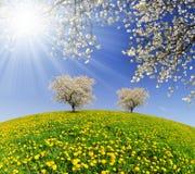 春天风景 库存图片