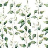 与开花的玉树的水彩绿色花卉无缝的样式 库存图片