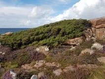 与开花的石南花的瑞典沿海岩石风景在前景 免版税库存照片