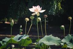 与开花的美好的夏天自然 免版税库存图片