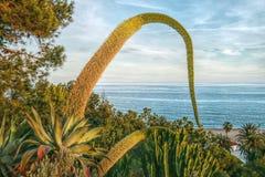 与开花的美好的风景仙人掌 免版税库存照片