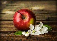 与开花的花的红色成熟苹果 免版税库存图片