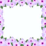 与开花的花的Backround 库存例证