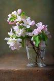 与开花的苹果树的静物画 库存照片