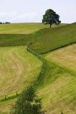 与开花的草甸和树的春天风景 免版税库存照片