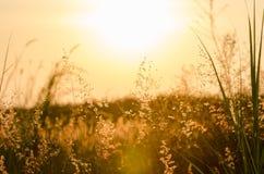 与开花的草的抽象自然背景在的草甸 库存照片