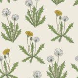 与开花的蒲公英植物,黄色花,种子的华美的色的植物的无缝的样式朝向并且留下手 向量例证