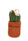 与开花的被编织的仙人掌花在罐 库存照片