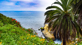 与开花的金莲花和大竺葵的海洋入口 库存照片