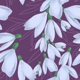 与开花的snowdrops和叶子的无缝的样式 皇族释放例证