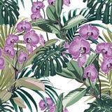 与异乎寻常的兰花花,棕榈叶,密林叶子的热带无缝的样式背景