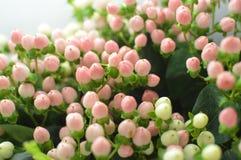 与异乎寻常的嗅到的花的柔和花束 免版税图库摄影