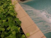 与异乎寻常的园林植物的瀑布水池 股票录像