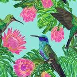 与异乎寻常的花和哼唱着鸟的花卉热带无缝的样式 开花的普罗梯亚木开花鸟和Monstera叶子 皇族释放例证