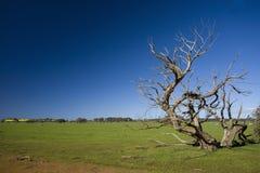 与异常的死的树的草地 免版税库存图片