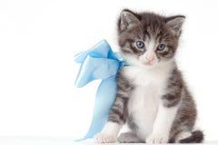 与弓的小的小猫 免版税库存图片