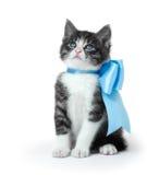 与弓的小的小猫 图库摄影