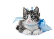 与弓的小的小猫 库存图片