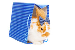 与弓的逗人喜爱的女性兔宝宝作为在背景的礼物 库存照片