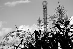 与弗累斯大转轮和下落塔的玉米 免版税库存图片