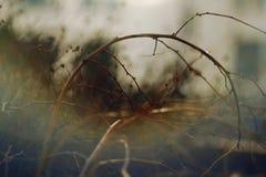 与弯曲的干燥树枝的被弄脏的抽象背景 库存图片