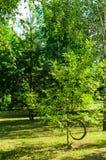 与弯曲的树干和分支的树 免版税库存图片