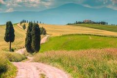 与弯曲的路和柏,意大利,欧洲的典型的托斯卡纳风景 免版税库存照片