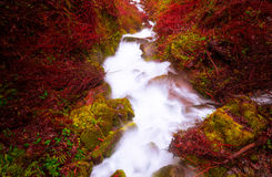 与强烈的颜色的小河v 免版税库存照片