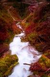 与强烈的颜色的小河VI 免版税库存照片