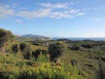 与当地树的澳大利亚南部的海岸风景 库存图片