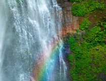 与彩虹和绿色植物的瀑布 免版税图库摄影