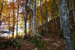与彩虹的颜色的秋季秀丽 免版税库存图片