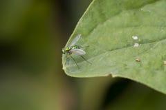 与彩虹翼的发光的绿色飞行 库存照片